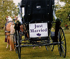 What could be more beautiful than a wedding right at the orchard!  Alber Orchard has a lovely gazebo for your vows, great caterers, and wagon rides and fall fun for your guests.  Serving Detroit and Ann Arbor from our farm in Manchester, Michigan.